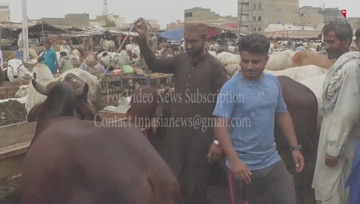 Karachi- Cattle market traders say business has been severely affected this year due to Corona